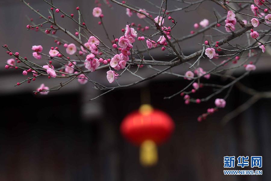 兴发娱乐网页版登录黔江:迎春灯笼挂古镇 节日气氛分外浓